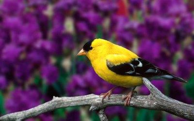 Bird Wallpapers HD | PixelsTalk.Net