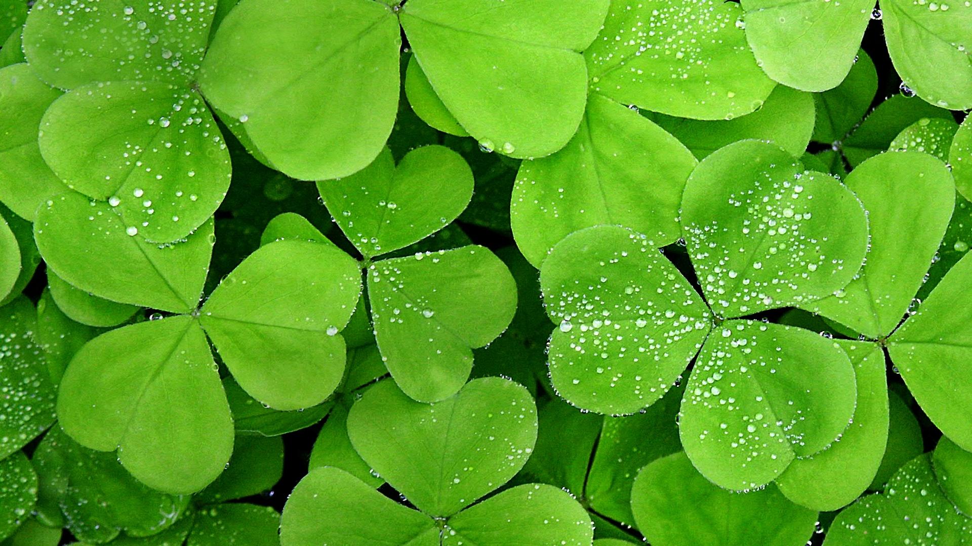 Rain Drop Wallpaper Hd Rain On Leaves Wallpaper Hd Pixelstalk Net