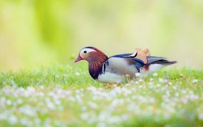 Birds Backgrounds free download   PixelsTalk.Net