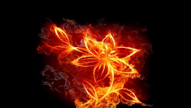Mobile Wallpaper Inspirational Quotes Fire Flowers Wallpapers Hd Pixelstalk Net