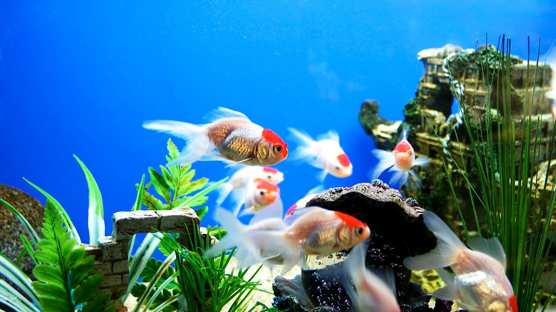 Download Fish Tank 3d Live Wallpaper Fish Wallpapers Hd Pixelstalk Net