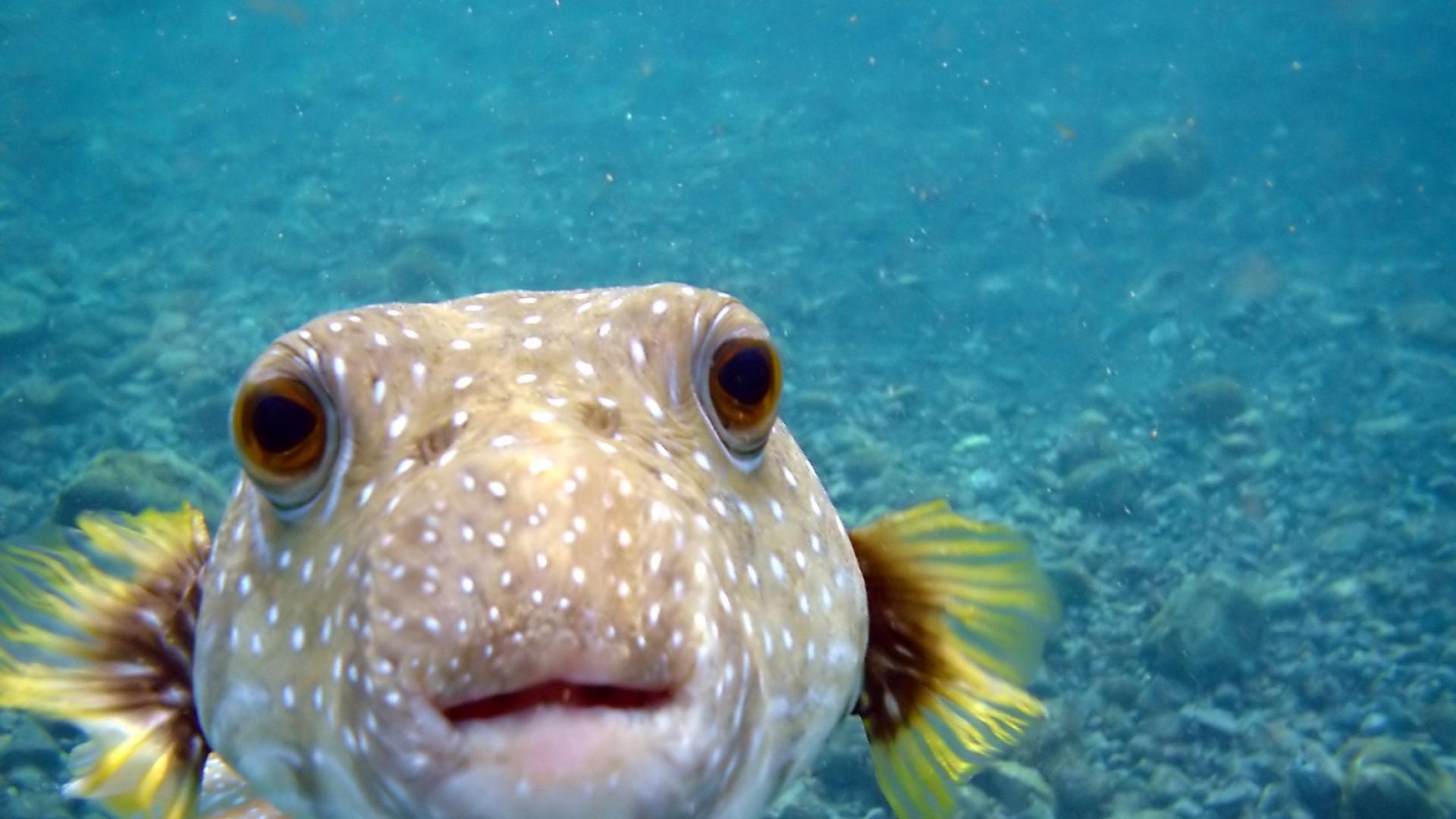 Tropical Ocean 3d Live Wallpaper Ocean Fish Wallpaper Hd Pixelstalk Net