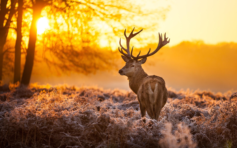 Spring Anime Wallpaper Free Deer Backgrounds Pixelstalk Net