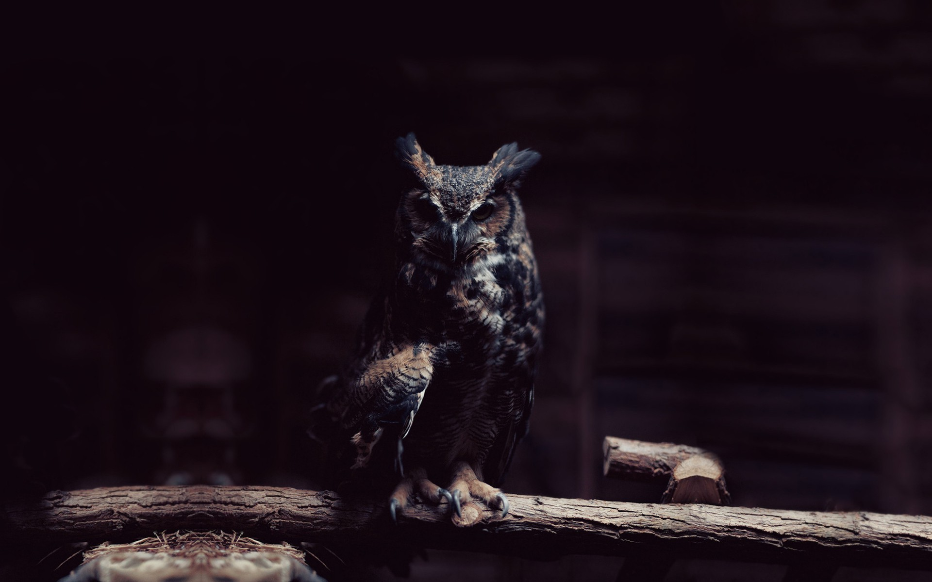 Cute Owl Wallpaper For Mac Dark Owl Wallpapers Pixelstalk Net