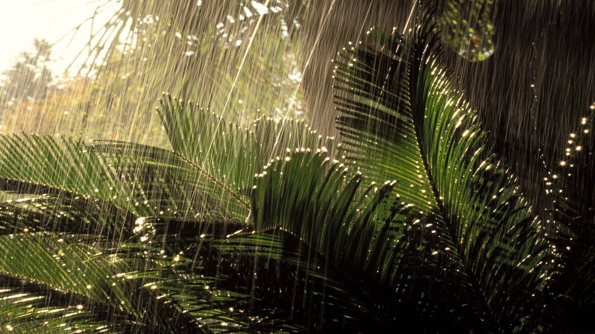Autumn Leaves 3d Live Wallpaper Rain Backgrounds Pixelstalk Net