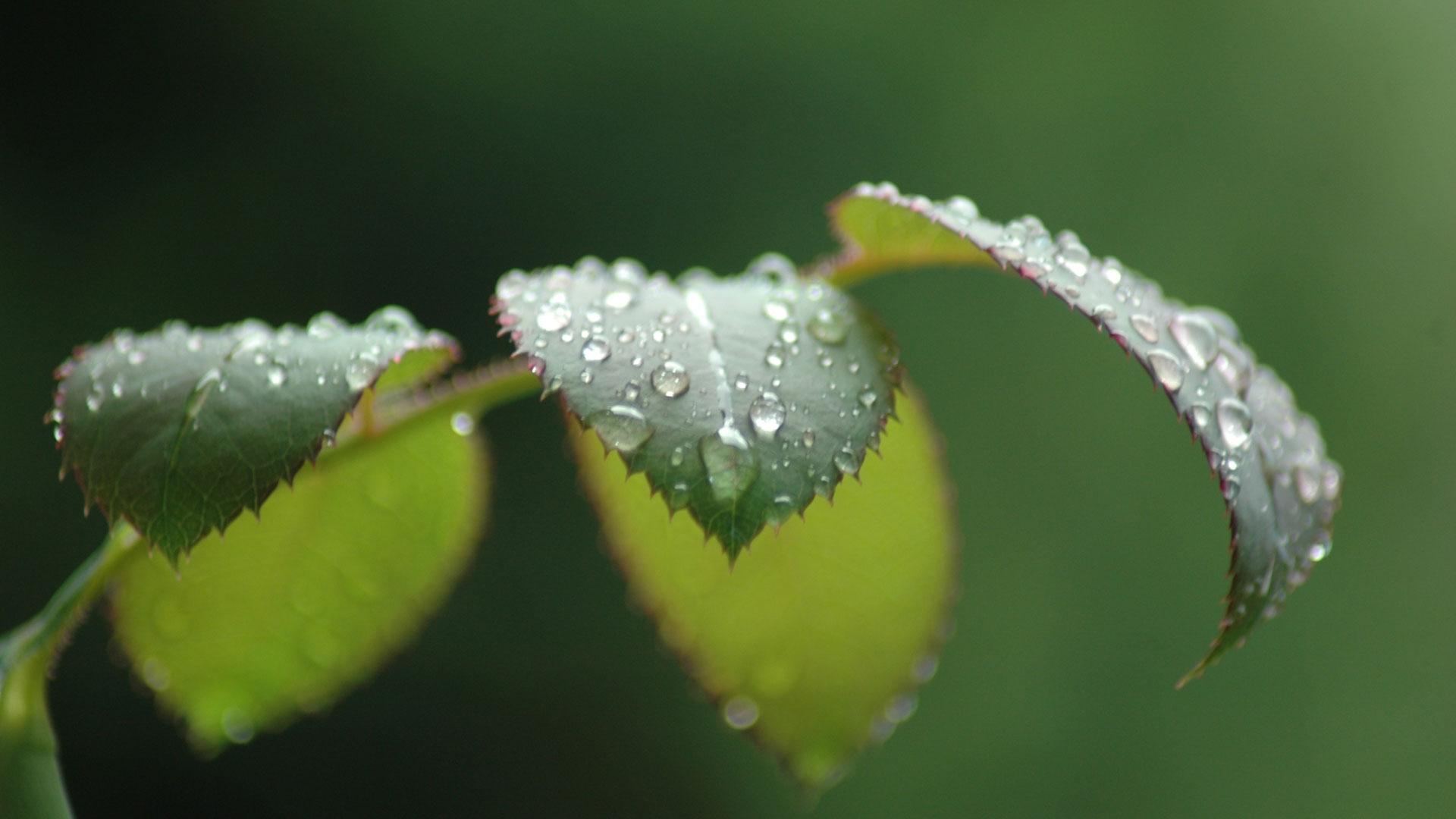 Rain Wallpapers With Quotes Hd Rain On Leaves Wallpaper Hd Pixelstalk Net