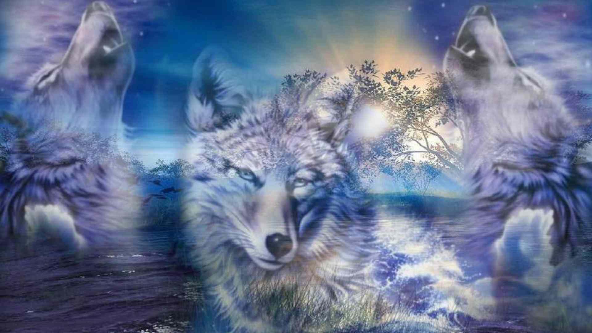 Best Wallpapers 3d Free Download Wolf Hd Desktop Wallpapers Pixelstalk Net