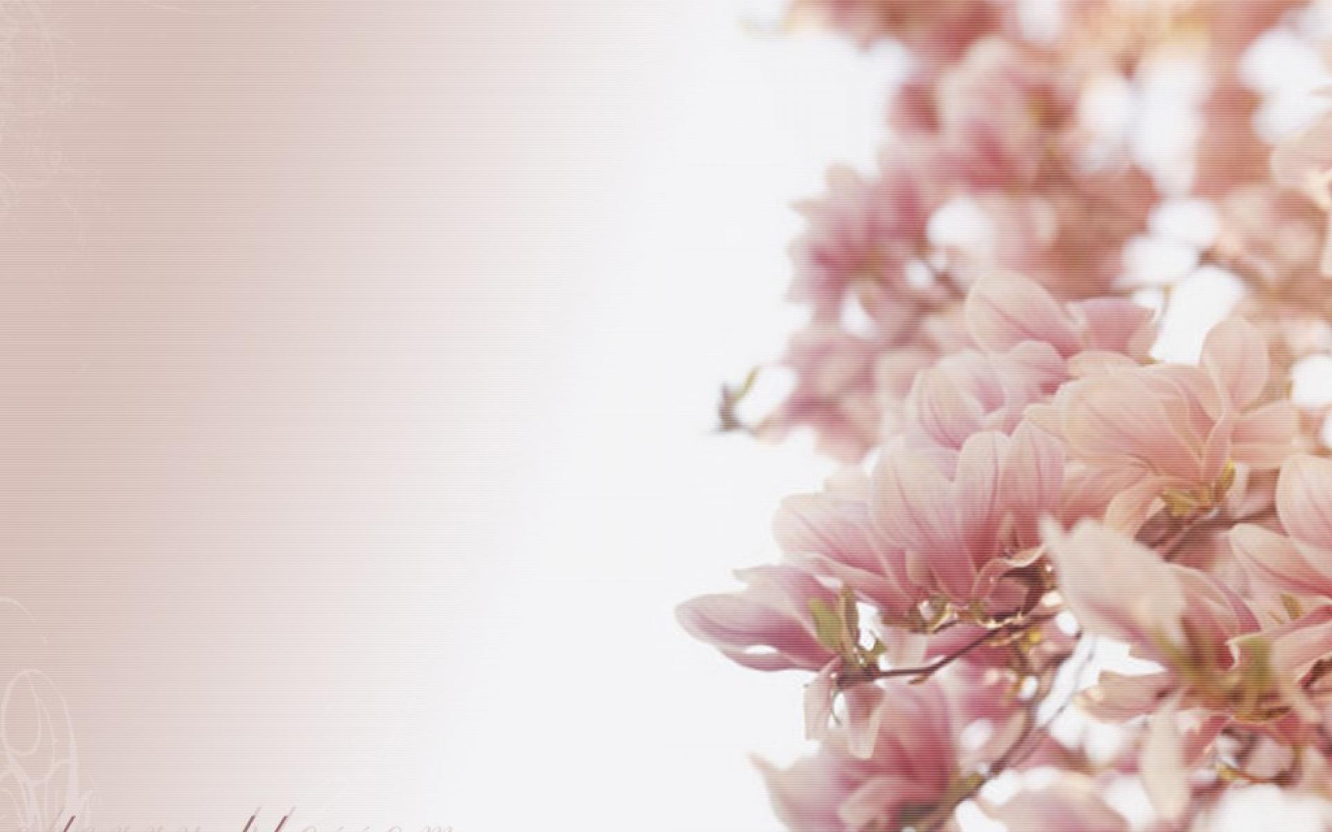 Wallpaper San Valentin 3d White Cherry Blossom Wallpapers Pixelstalk Net