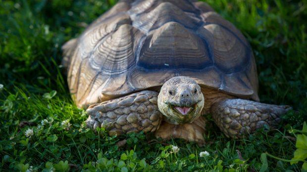 Free Wallpapers Fall Season Free Turtle Backgrounds Download Pixelstalk Net