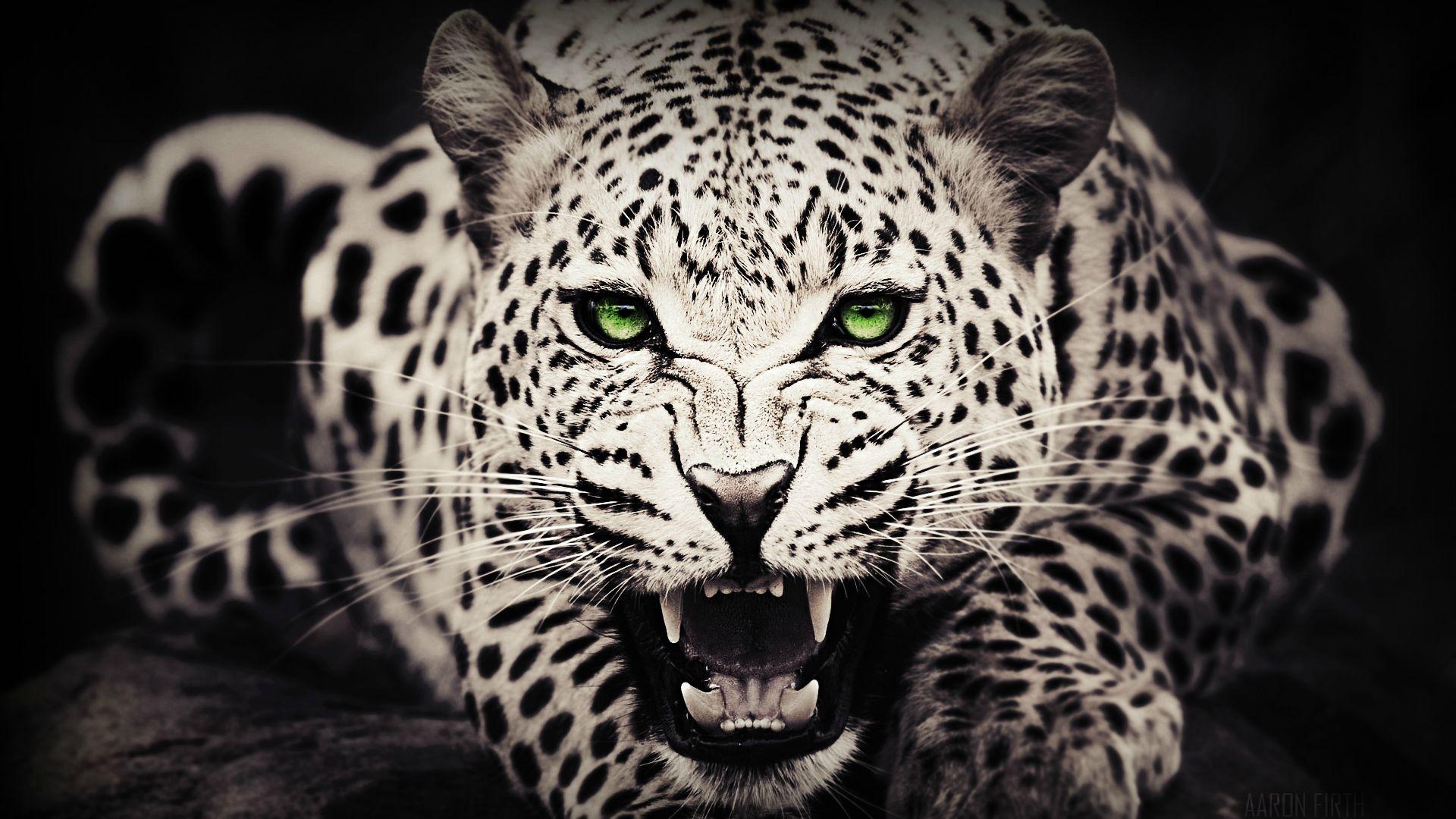 3d Wallpaper Widescreen High Resolution Game Leopard Wallpapers Hd Pixelstalk Net