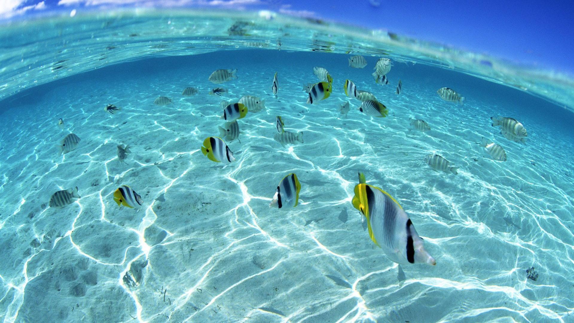 Hd wallpaper underwater -  Underwater Wallpapers Hd Download