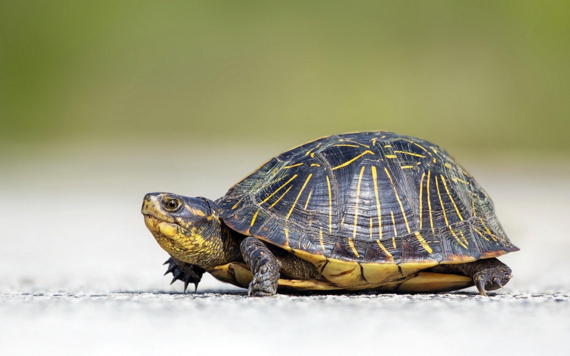 Ninja 3d Wallpaper Free Turtle Backgrounds Download Pixelstalk Net