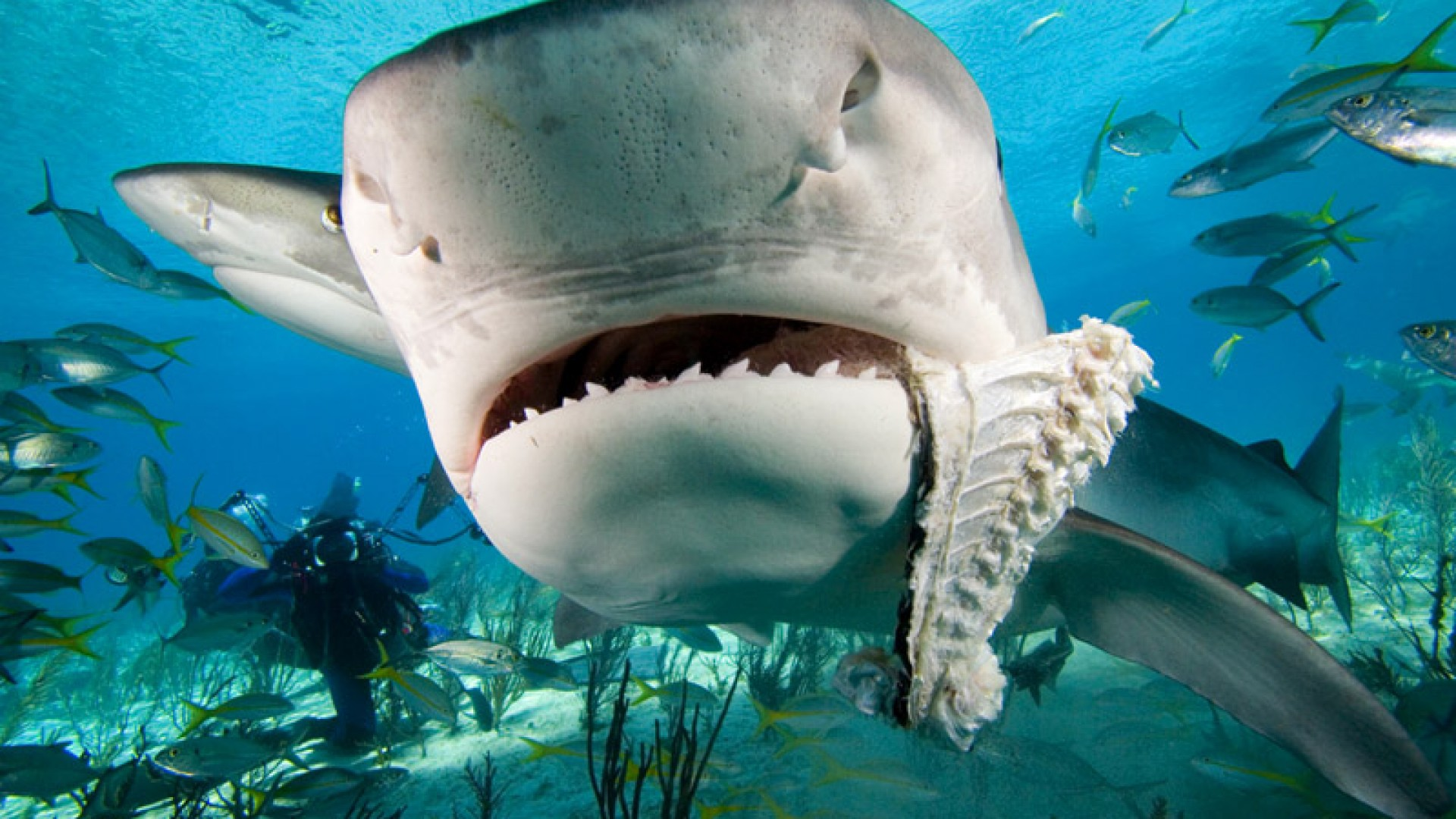 Fish Tank Wallpaper Hd Shark Wallpaper Hd Pixelstalk Net