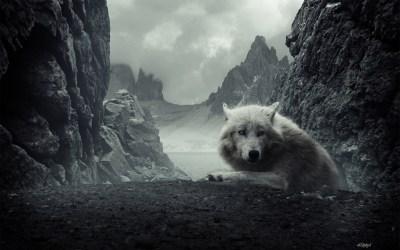 HD Wolf Backgrounds | PixelsTalk.Net