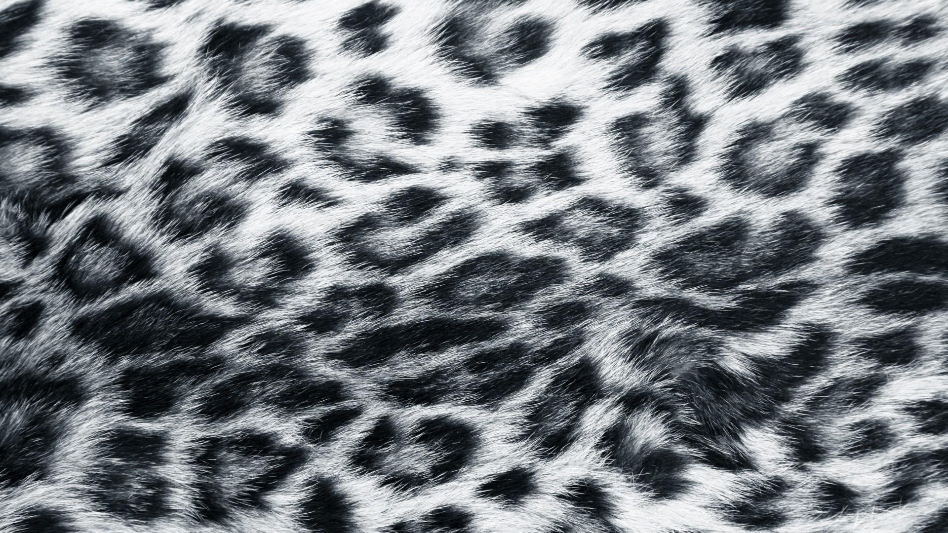 Hipster Fall Wallpaper Leopard Print Wallpapers Hd Pixelstalk Net