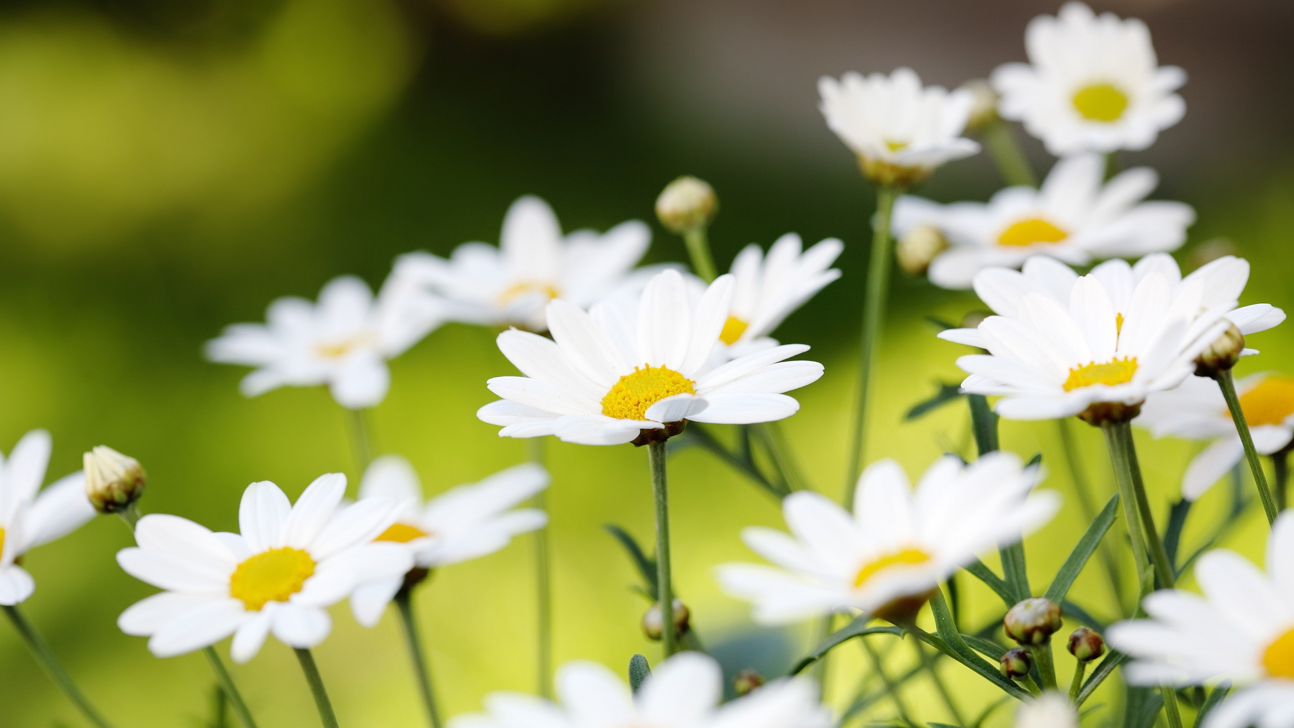 Awesome Love Quotes Hd Wallpapers Daisy Wallpaper High Quality Pixelstalk Net