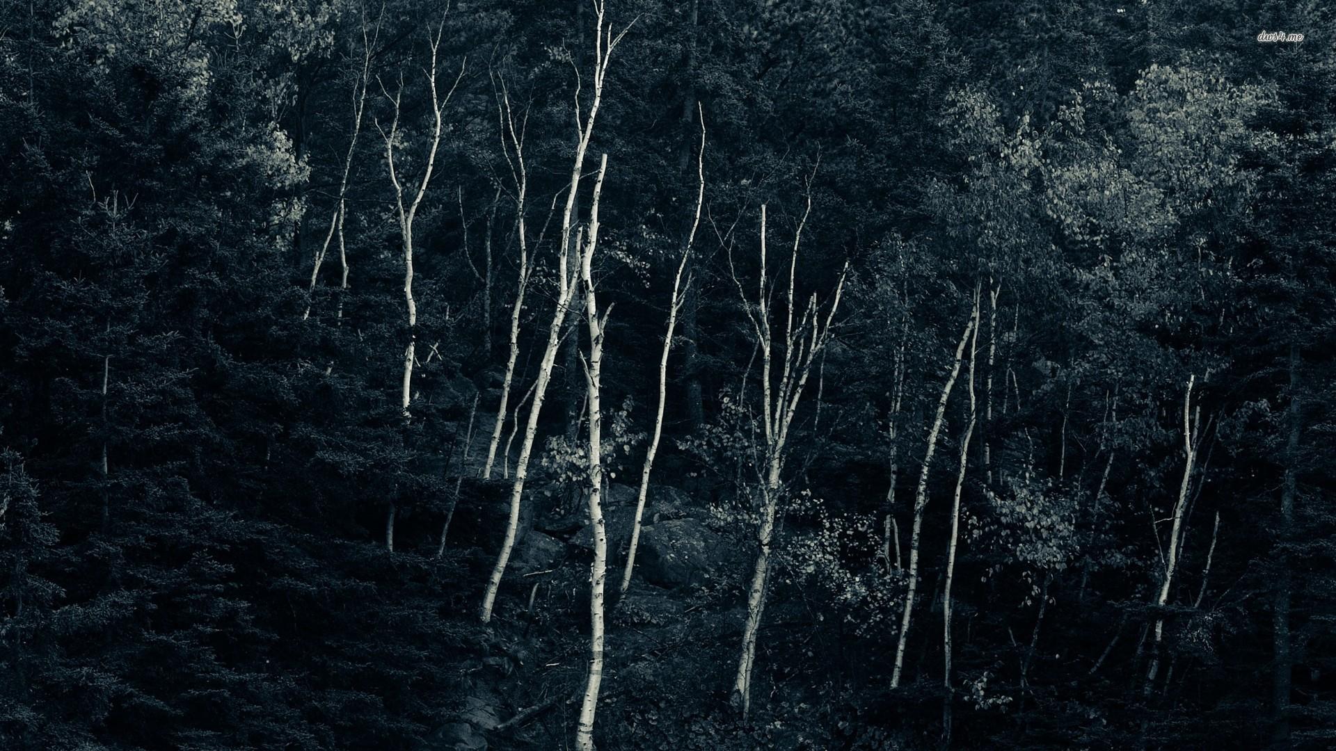 3d Snowy Cottage Animated Wallpaper Free Download Hd Dark Woods Backgrounds Pixelstalk Net