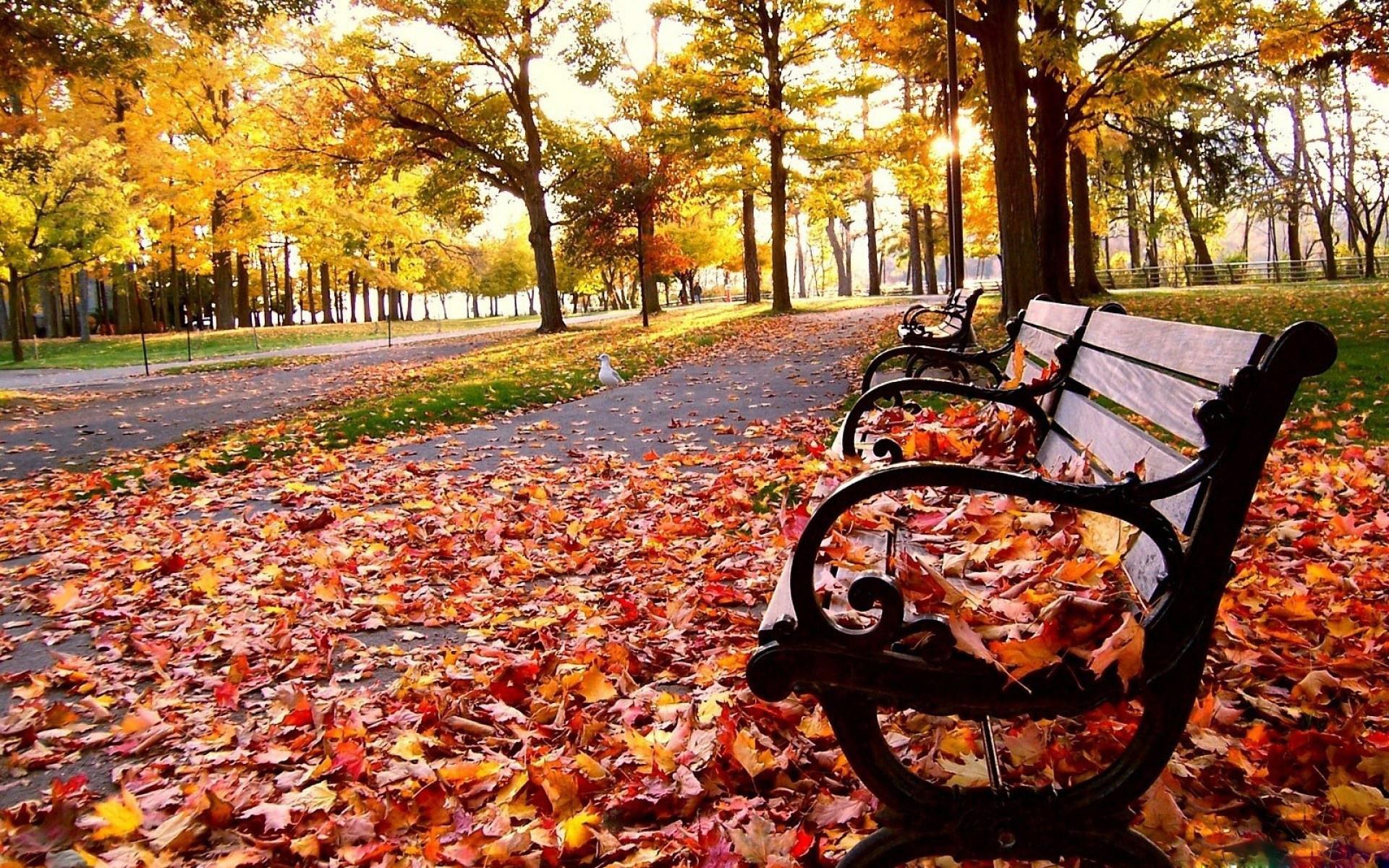 Free Fall Pumpkin Desktop Wallpaper Fall Wallpapers Hd Pixelstalk Net