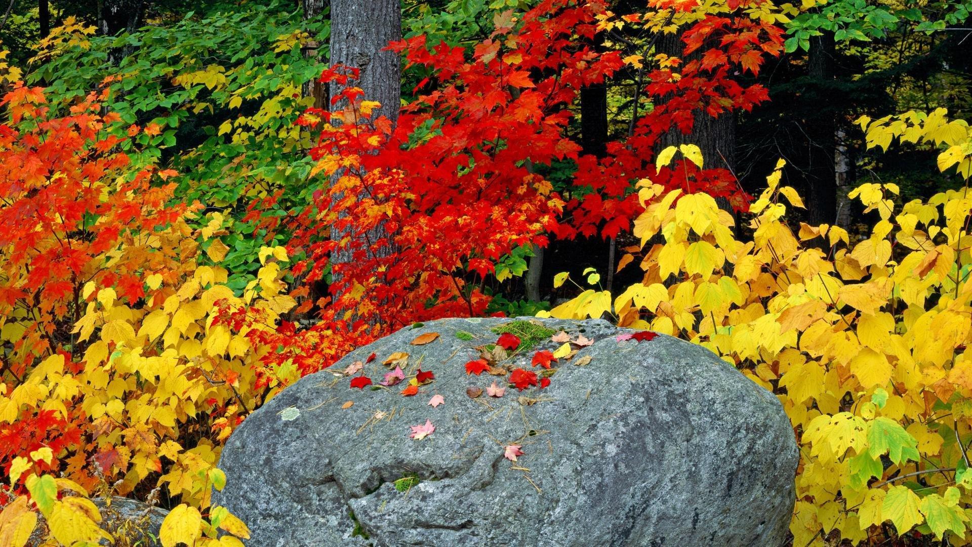 Adirondack Fall Wallpaper Fall Foliage Wallpapers Hd Pixelstalk Net