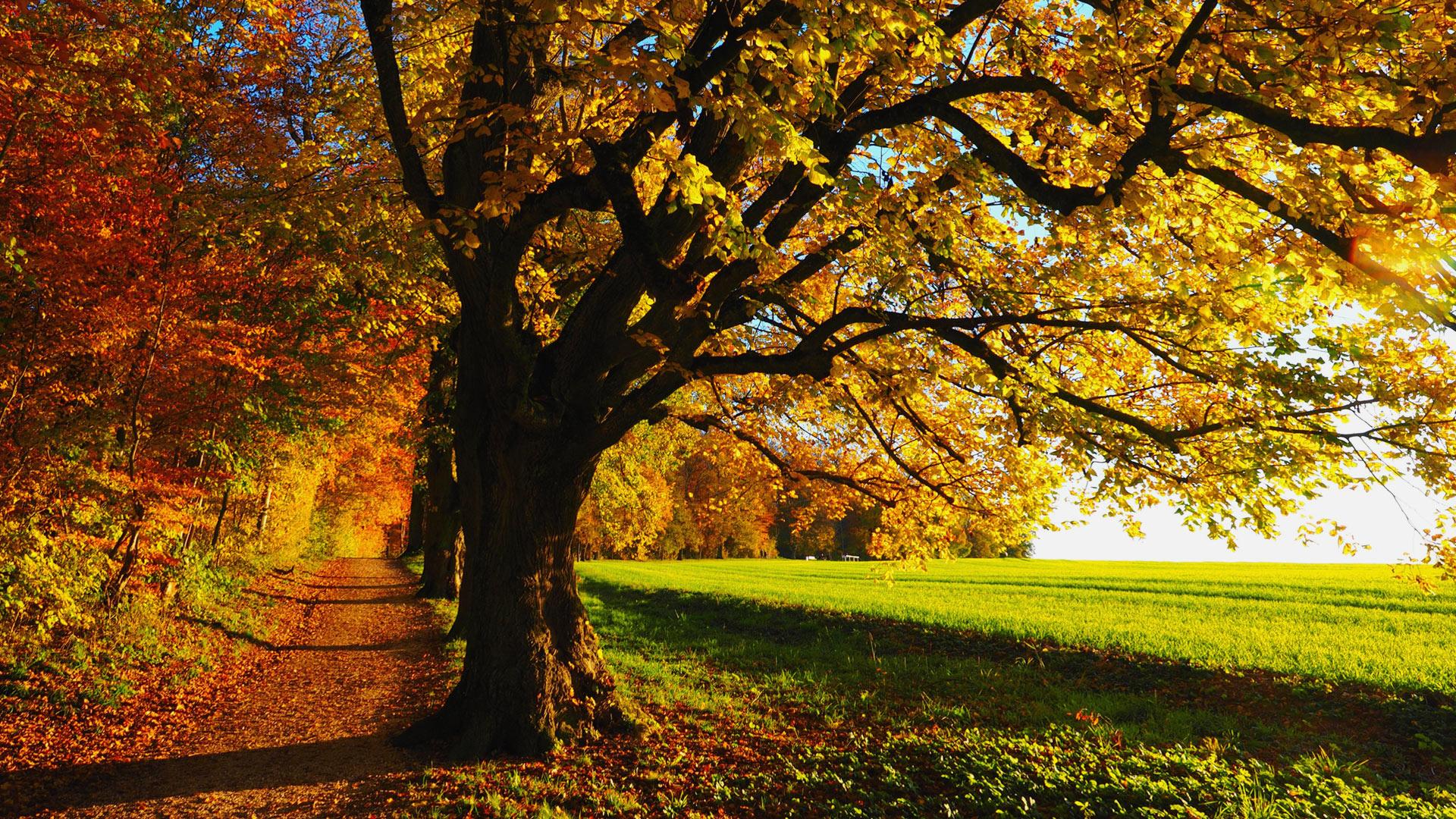 Desktop Wallpaper Fall Scenes Fall Scenery Wallpapers Free Download Pixelstalk Net