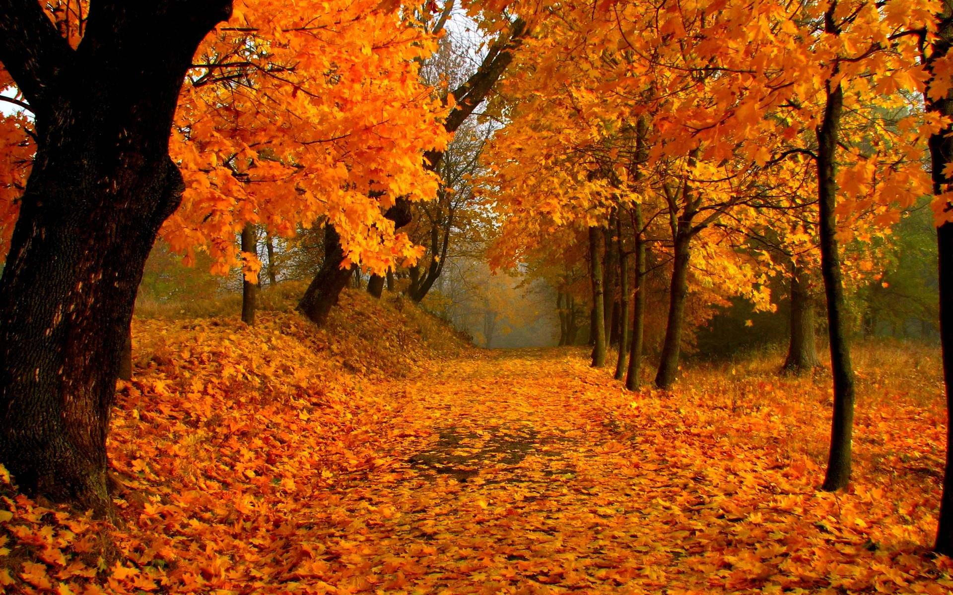 Fall Season Wallpapers Hd Fall Scenery Wallpapers Free Download Pixelstalk Net