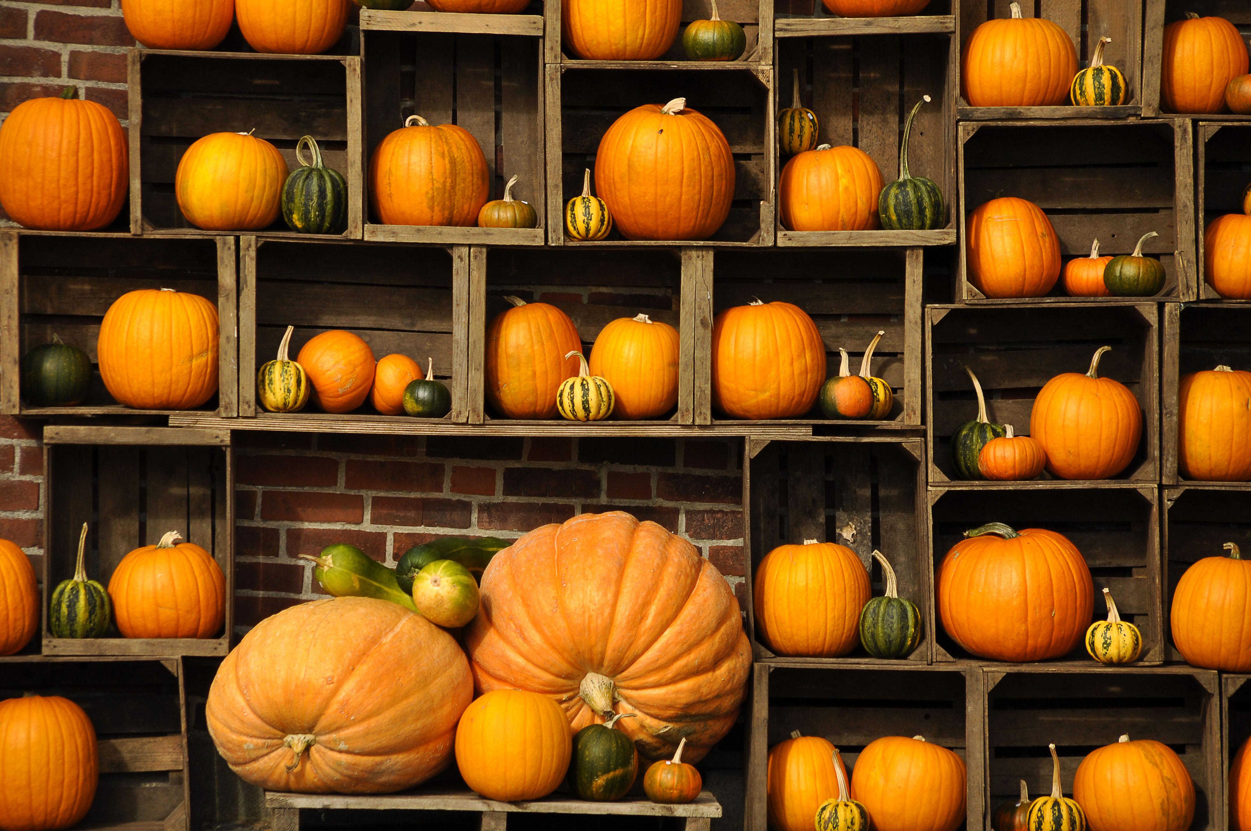 Fall Pumpkins Desktop Wallpaper Free Desktop Pumpkin Wallpapers Pixelstalk Net