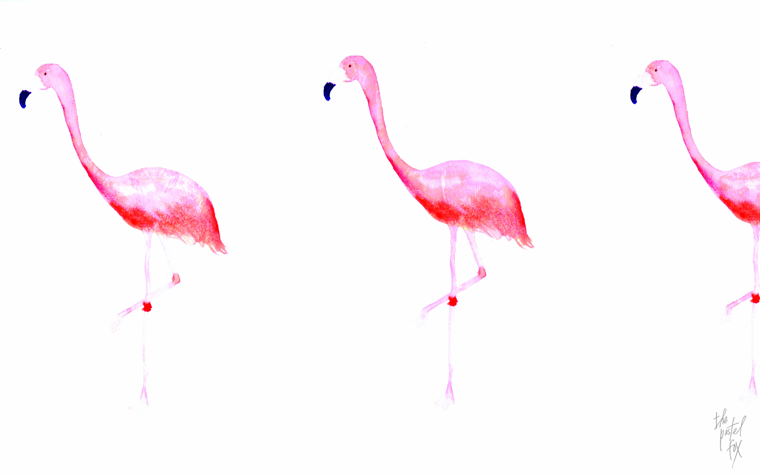 3d Moving Wallpapers For Desktop Free Download Flamingo Wallpapers Hd Pixelstalk Net
