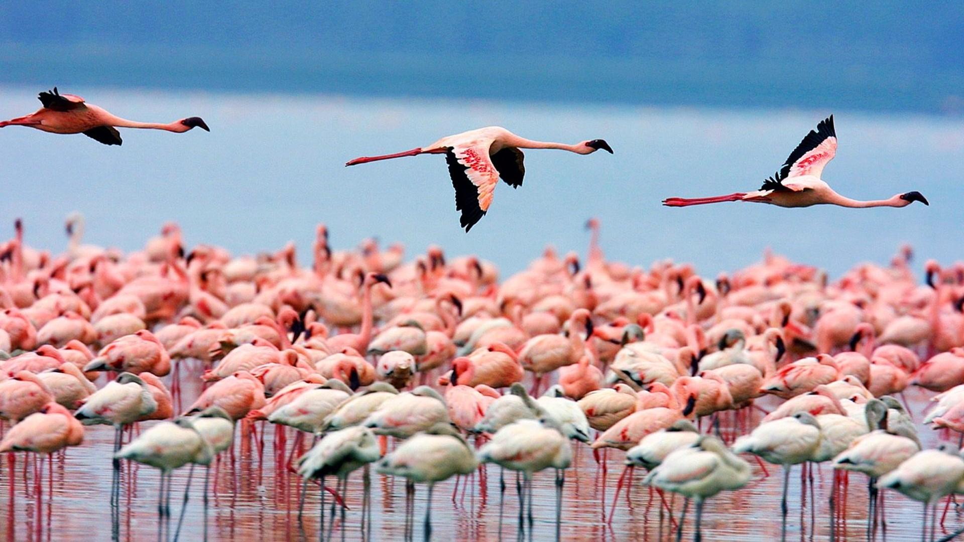 Free Download Funny Wallpaper Quotes Free Download Flamingo Wallpapers Pixelstalk Net