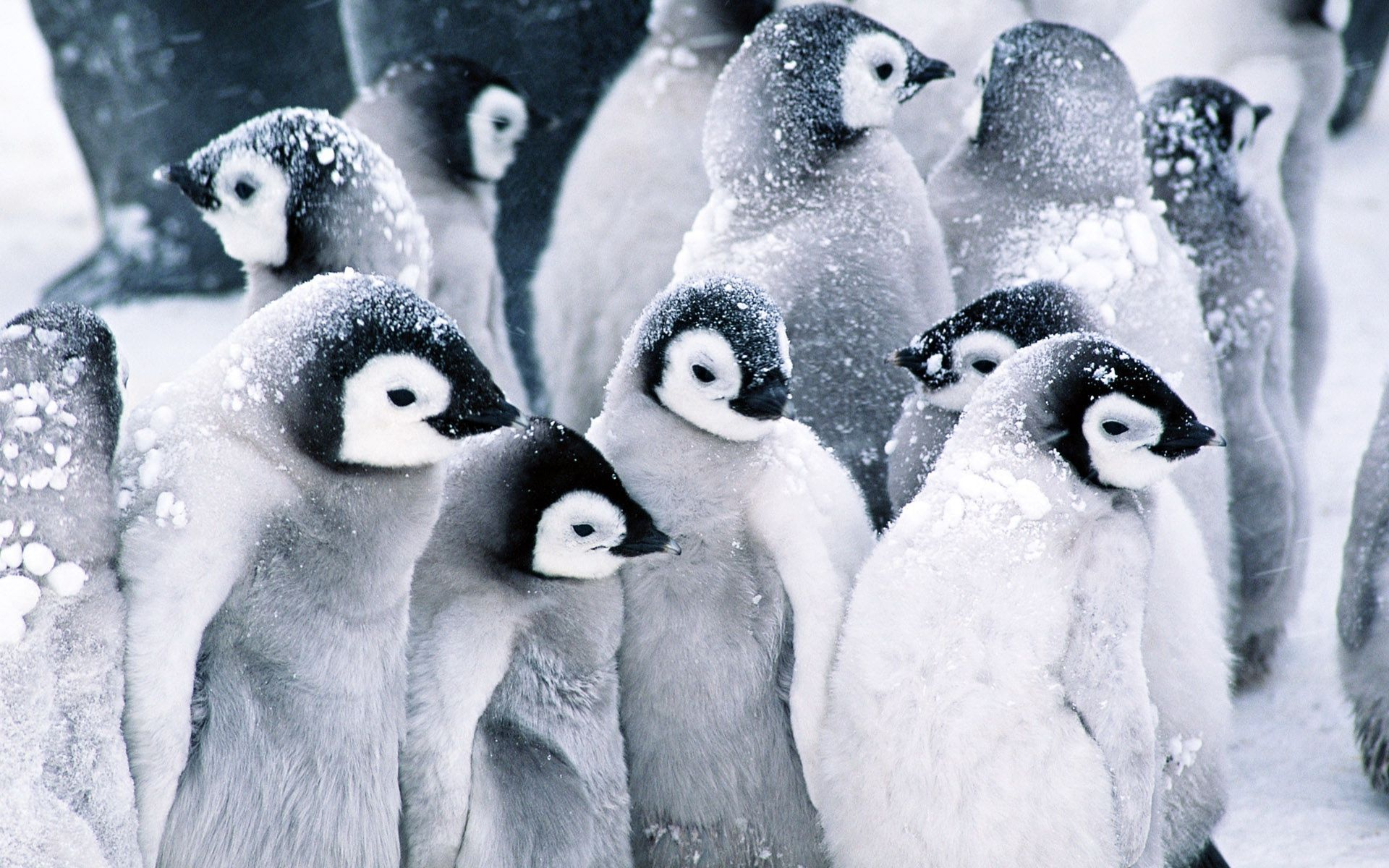 Cute Stitch Phone Wallpaper Penguin Hd Wallpapers Pixelstalk Net