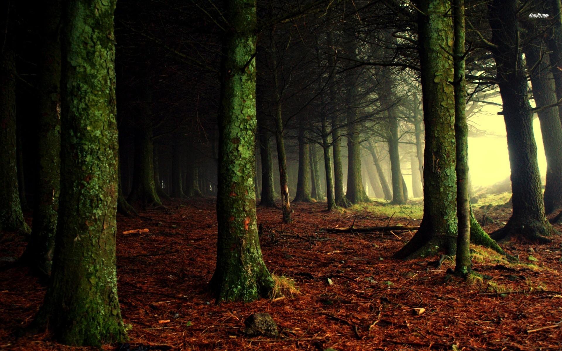 Foggy Fall Wallpaper Hd Dark Woods Backgrounds Pixelstalk Net