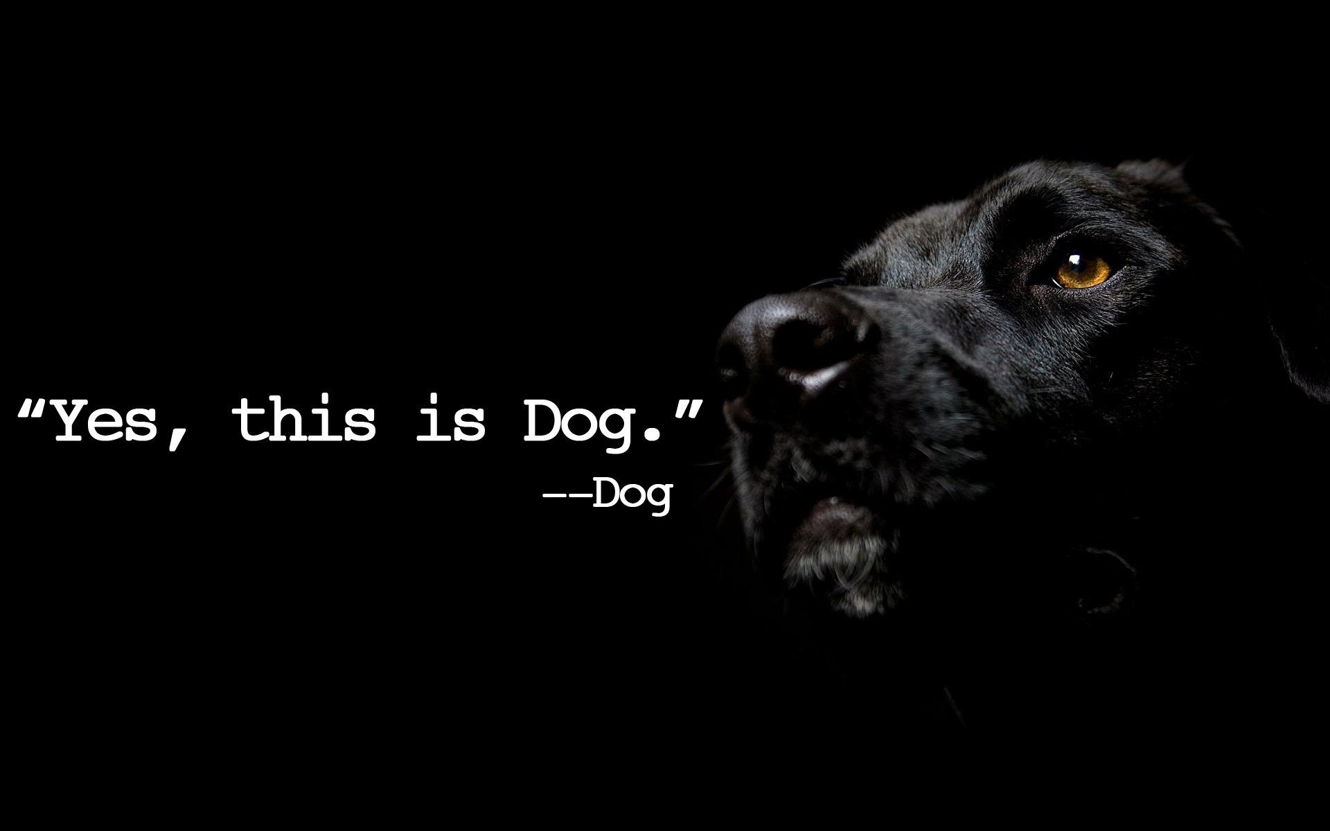Fall Wallpaper With Dogs Meme Backgrounds Hd Pixelstalk Net