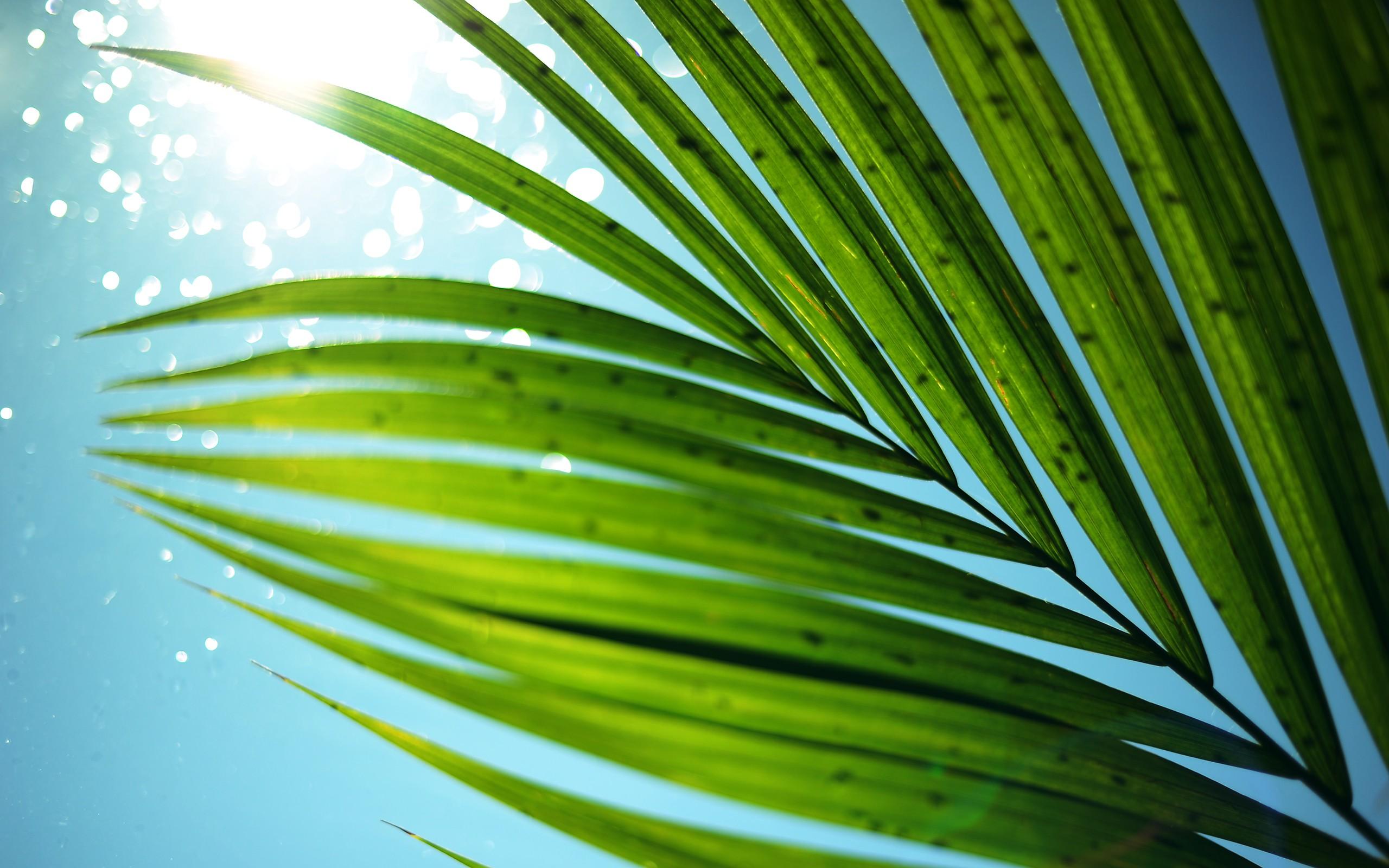 Mothers Day Hd Wallpaper Palm Tree Wallpaper Hd Pixelstalk Net