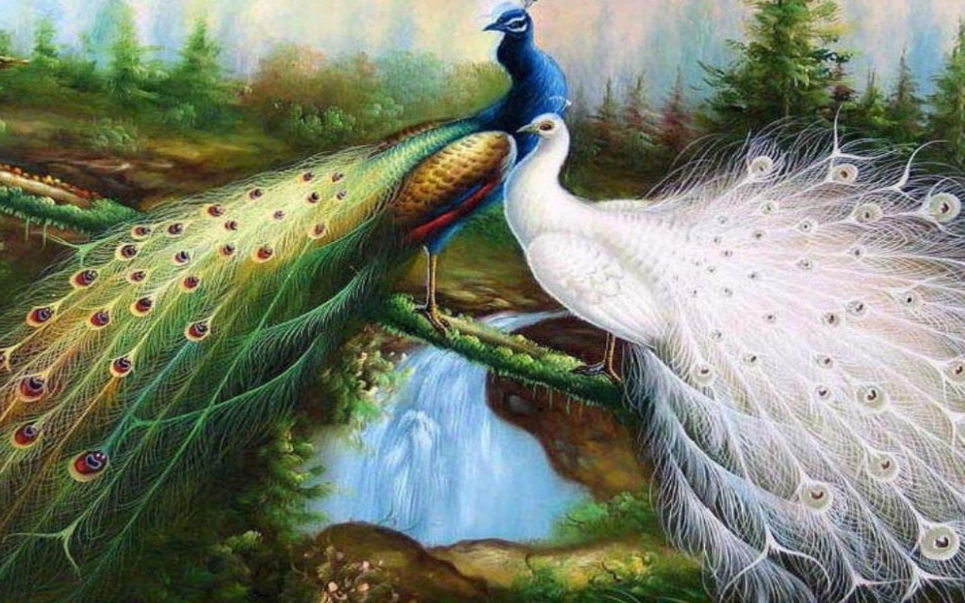 Fall Bird Wallpaper Peacock Wallpapers Hd Pixelstalk Net