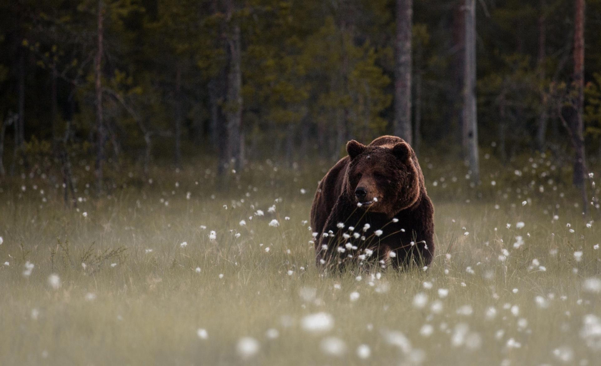 Fall Hd Wallpapers 1080p Free Hd Bear Wallpapers Pixelstalk Net