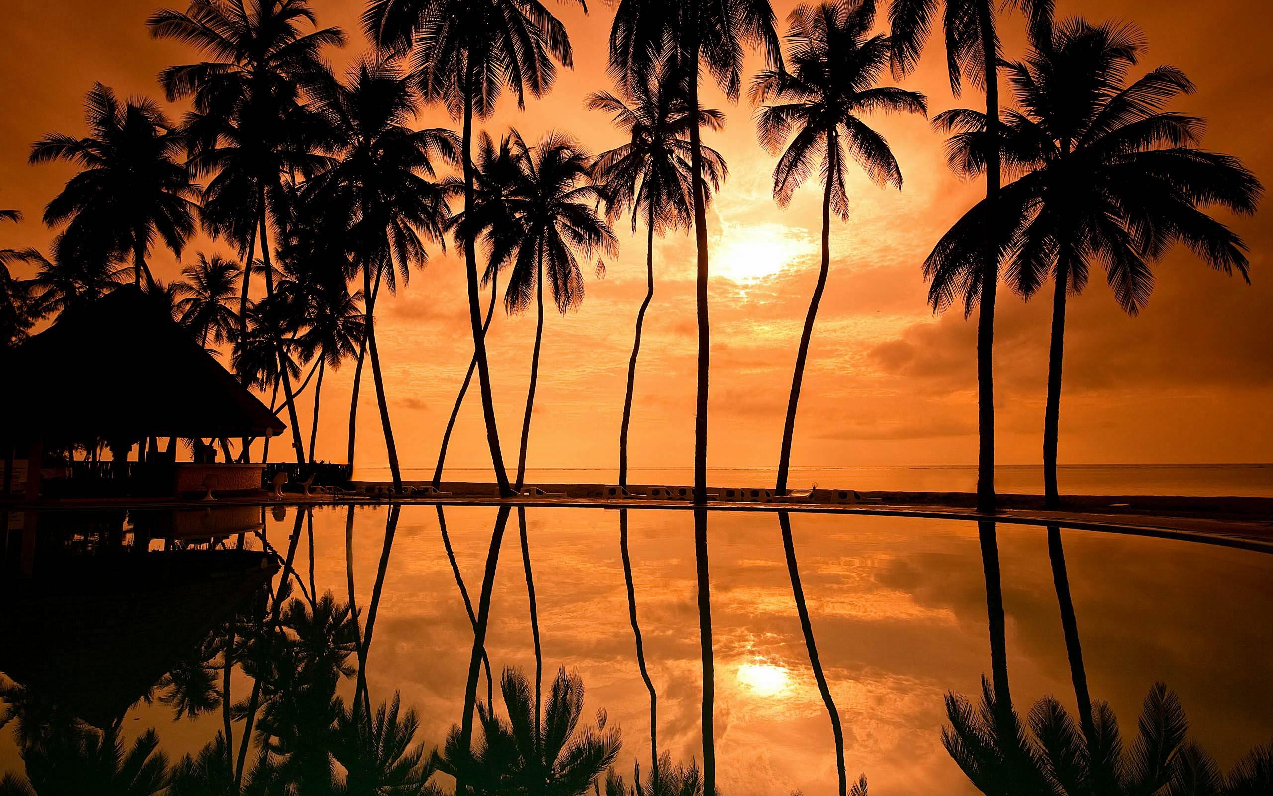 Sunrise 3d Wallpaper Palm Tree Wallpaper Hd Pixelstalk Net