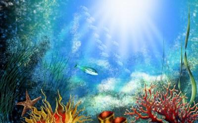 Underwater Wallpaper Download Free | PixelsTalk.Net
