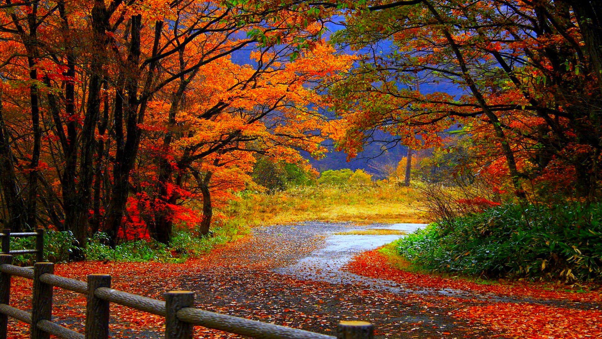 Cute Rustic Fall Wallpapers For Laptop Amazing Wallpapers Hd 1080p Pixelstalk Net