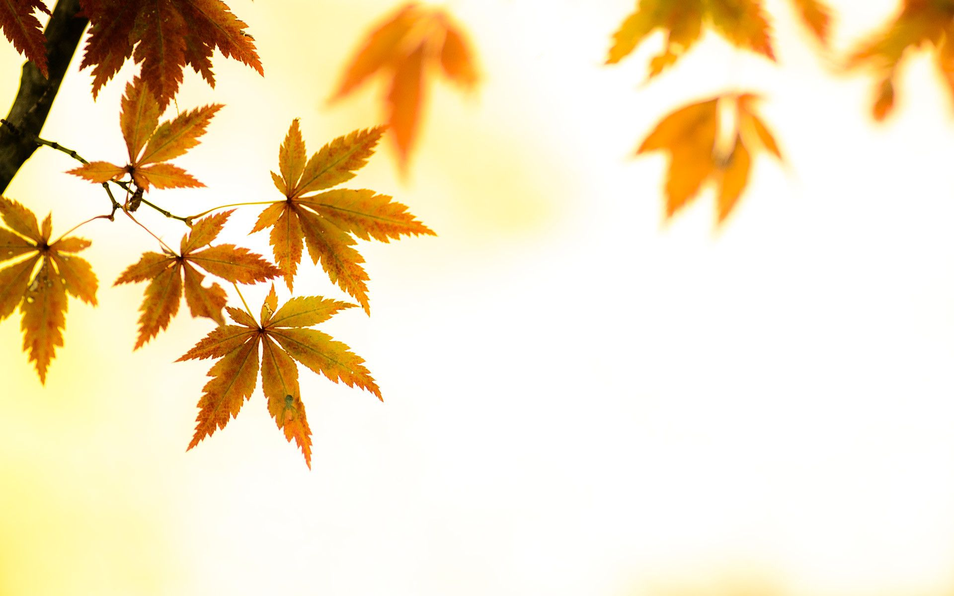 Fall Leaves Desktop Wallpaper Download Free Artsy Backgrounds Pixelstalk Net