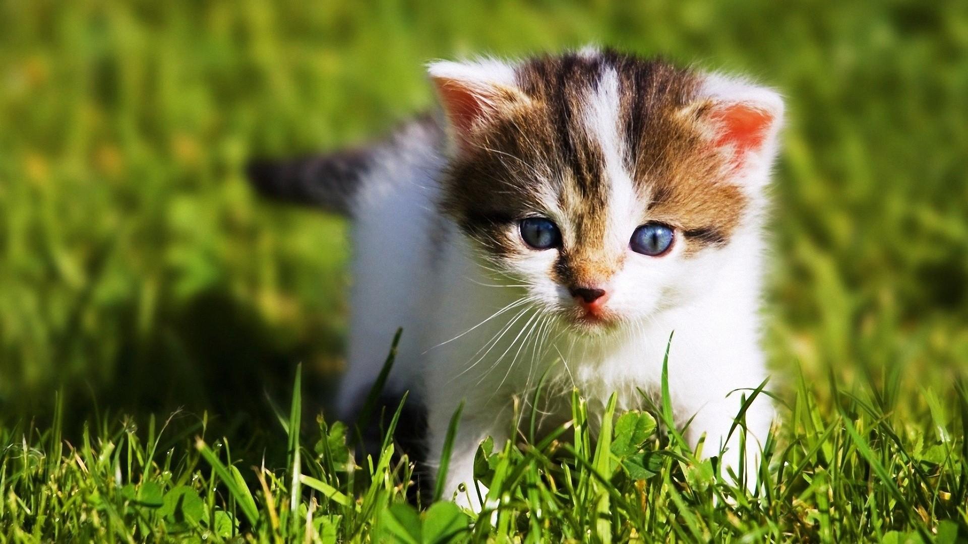 Fall Baby Animal Wallpaper Free Download Cute Baby Animal Wallpapers Pixelstalk Net