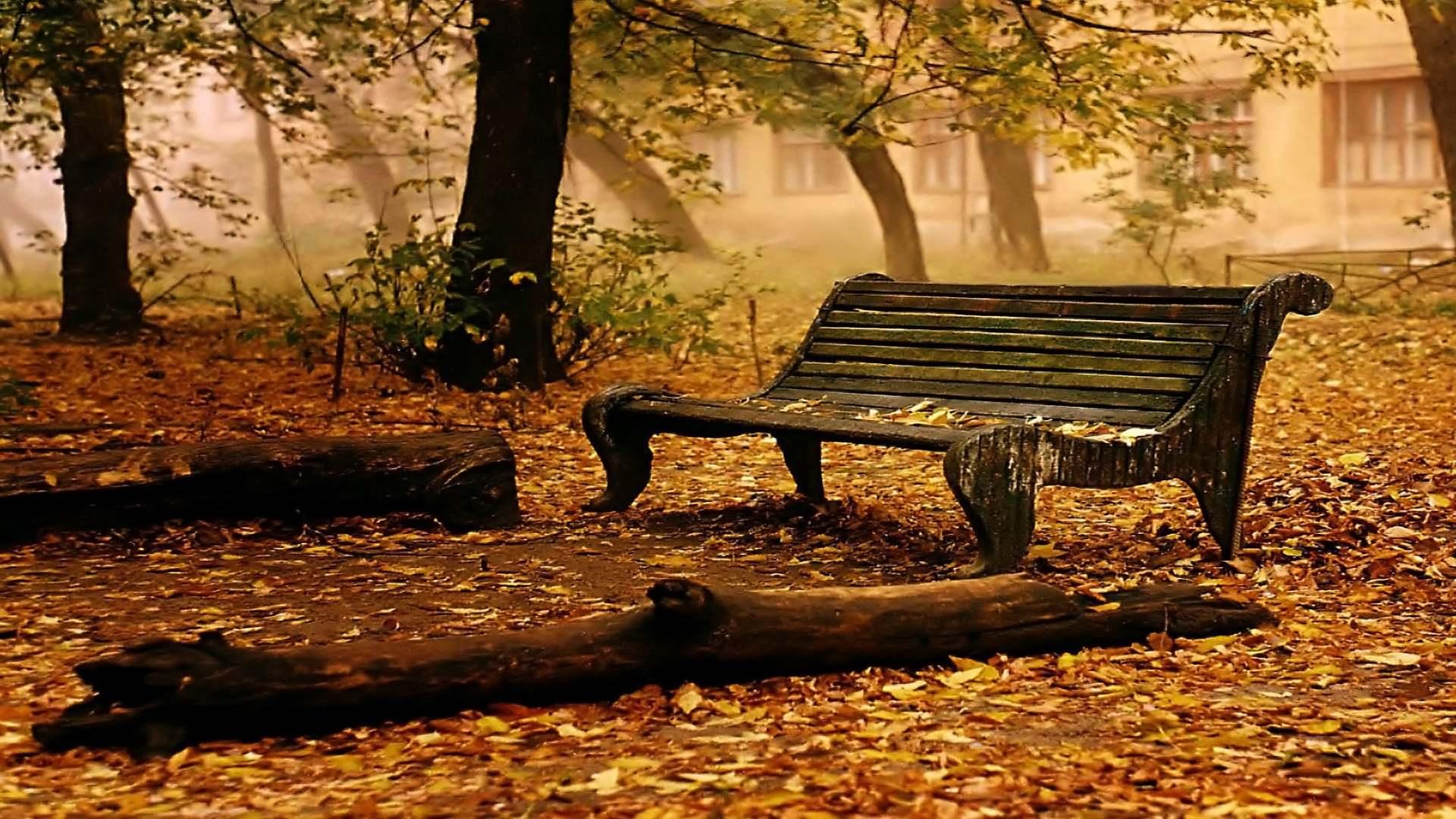 Fall Foliage Wallpaper All Free Download Wallpaper Hd Pixelstalk Net