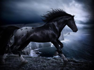 HD Black Horse Wallpapers | PixelsTalk.Net