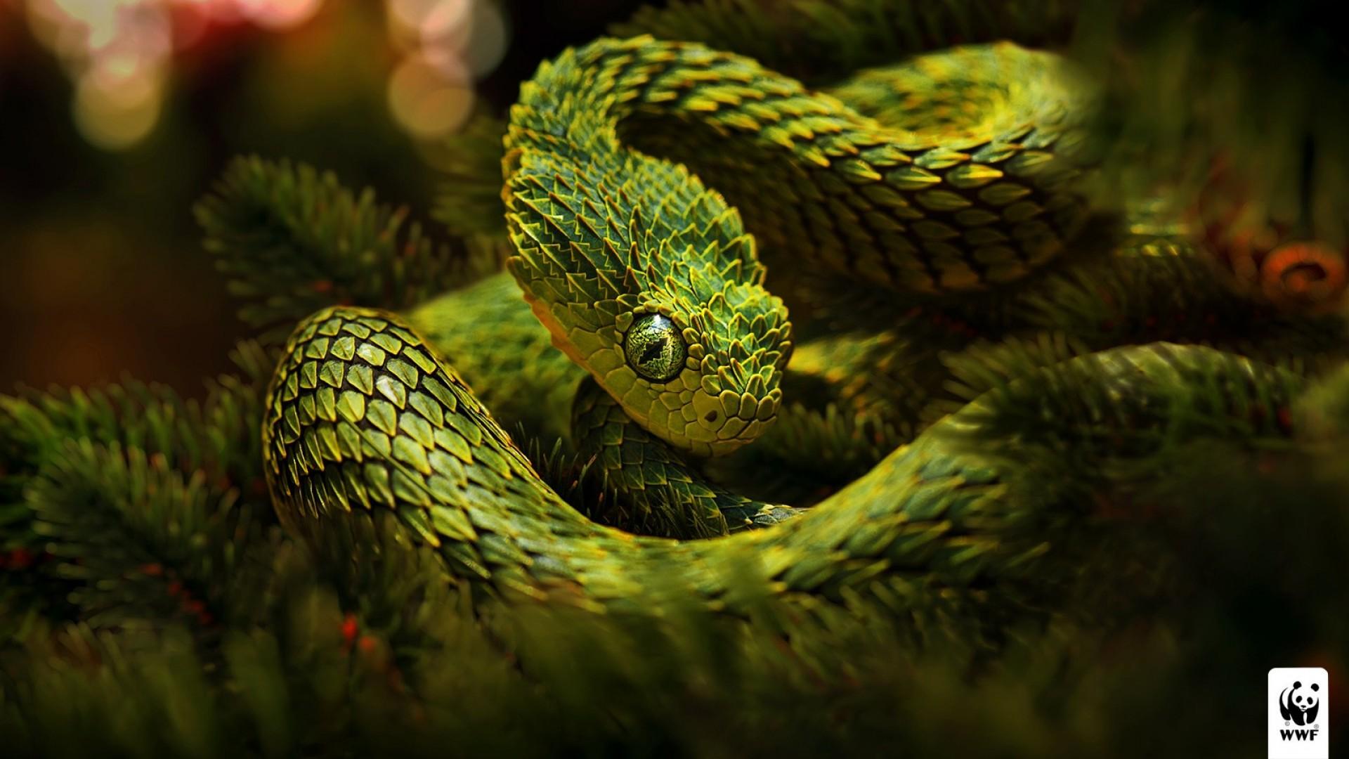 Happy New Year 2016 3d Wallpaper For Pc Viper Snake Hd Wallpapers Pixelstalk Net