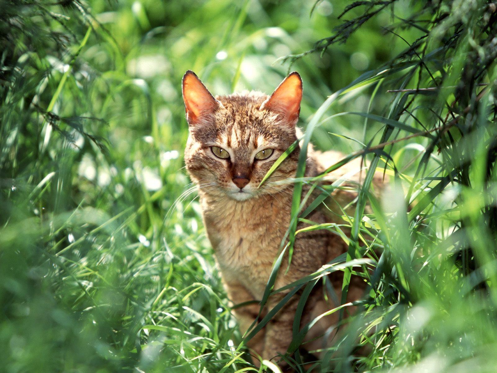 Warrior Cats Wallpaper With Quotes Download Free Warrior Cats Backgrounds Pixelstalk Net