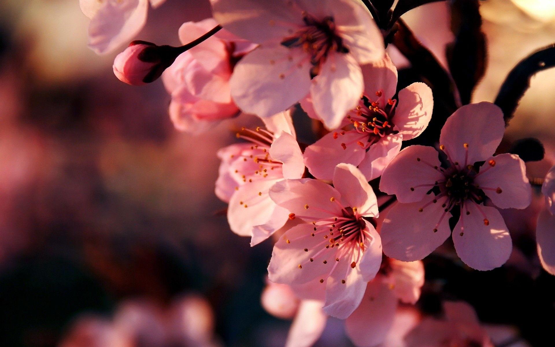 3d Hd Wallpapers Flowers Rose Pink Flowers Wallpapers Hd Pixelstalk Net