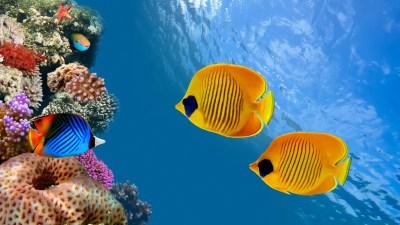 Aquarium HD Wallpapers   PixelsTalk.Net