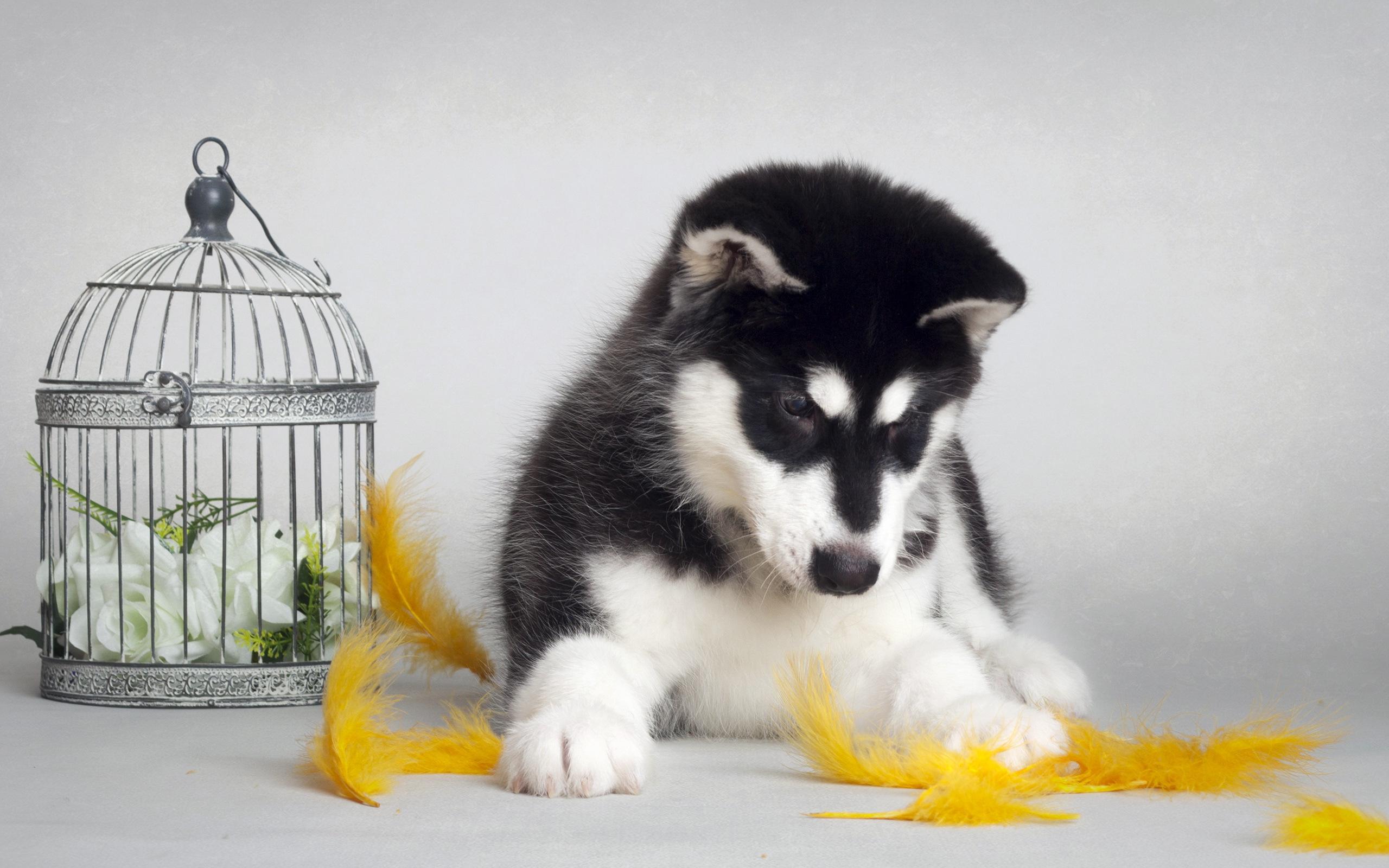 Free Fall Puppy Wallpaper Cute Puppy Backgrounds Download Free Pixelstalk Net
