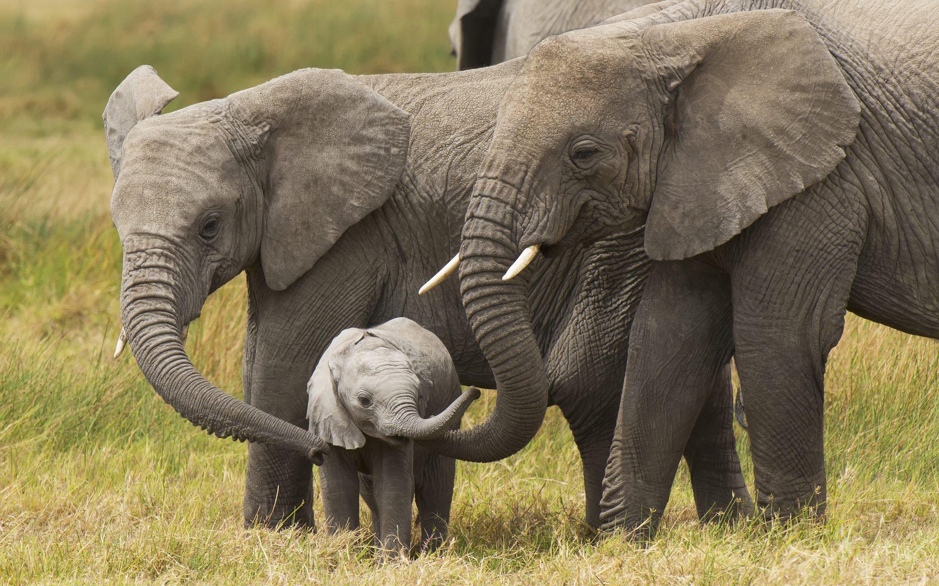 Cute Babies Hd Wallpapers For Mobile Free Download Desktop Elephant Hd Wallpapers Pixelstalk Net