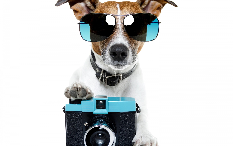 Cute Puppies Wallpapers For Mobile Summer Wallpaper Hd Free Download Pixelstalk Net