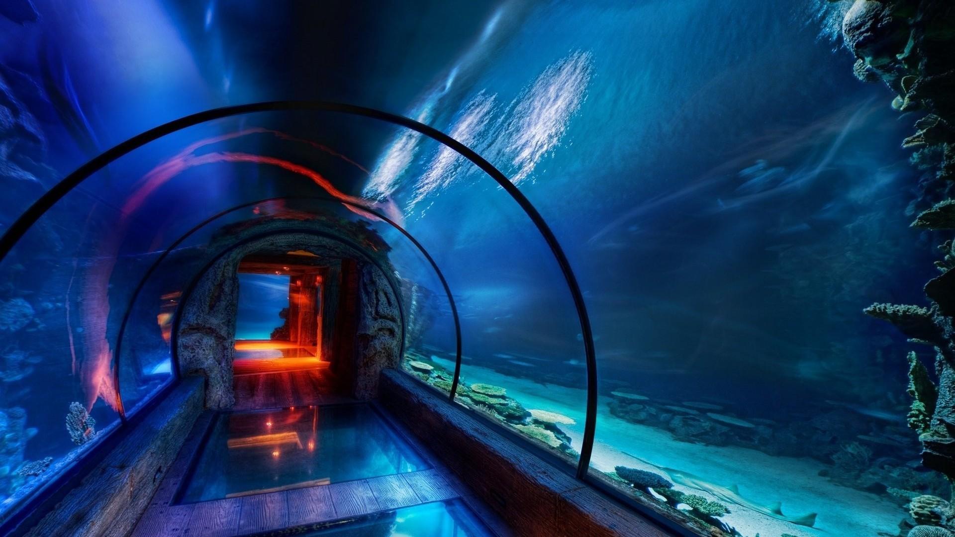 Fish 3d Wallpaper Hd Aquarium Hd Wallpapers Pixelstalk Net
