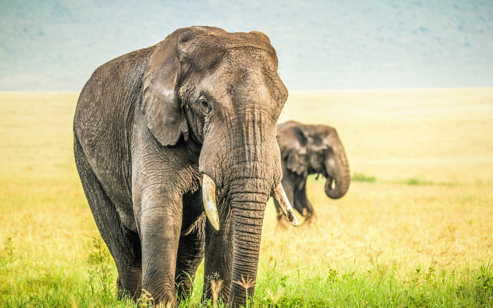 Free Download Cute Baby Wallpaper For Pc Elephant Images Free Download Pixelstalk Net